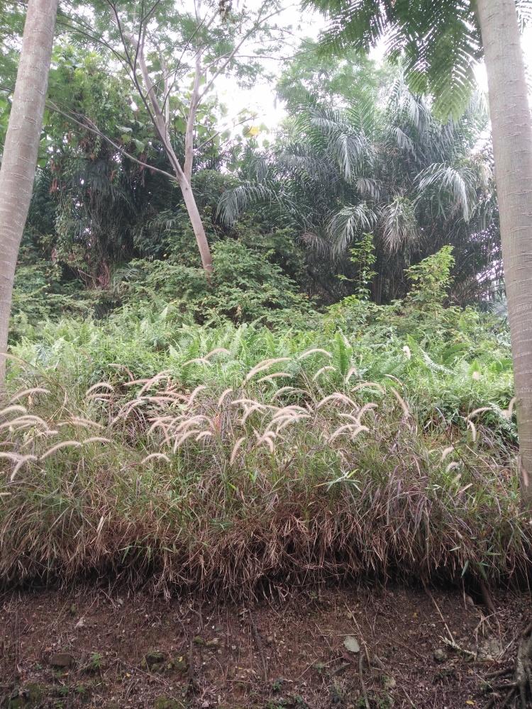 Calm Plants